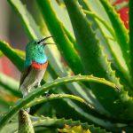 Aloe vera krema super izbira za poleti in pozimi